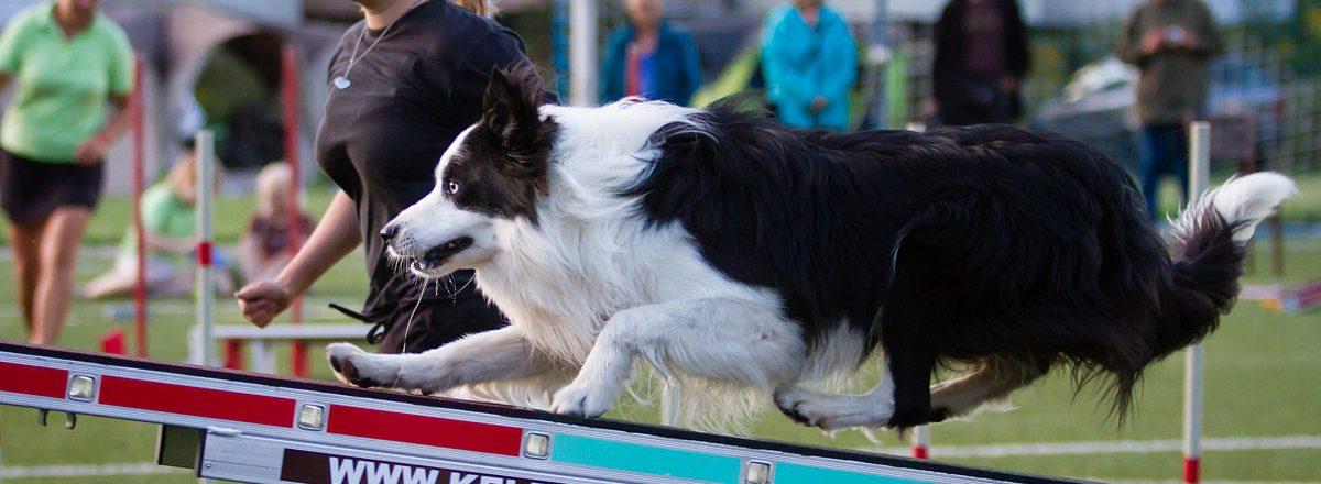 Novara e Confienza: a scuola di agility dog