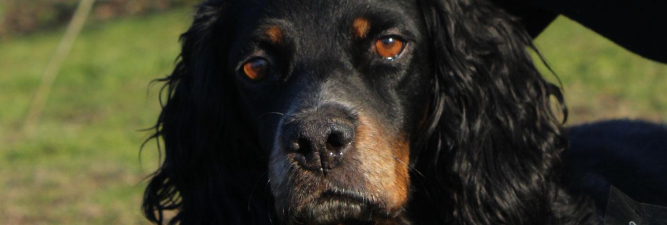 11 Novembre: ginnastica propriocettiva per cani