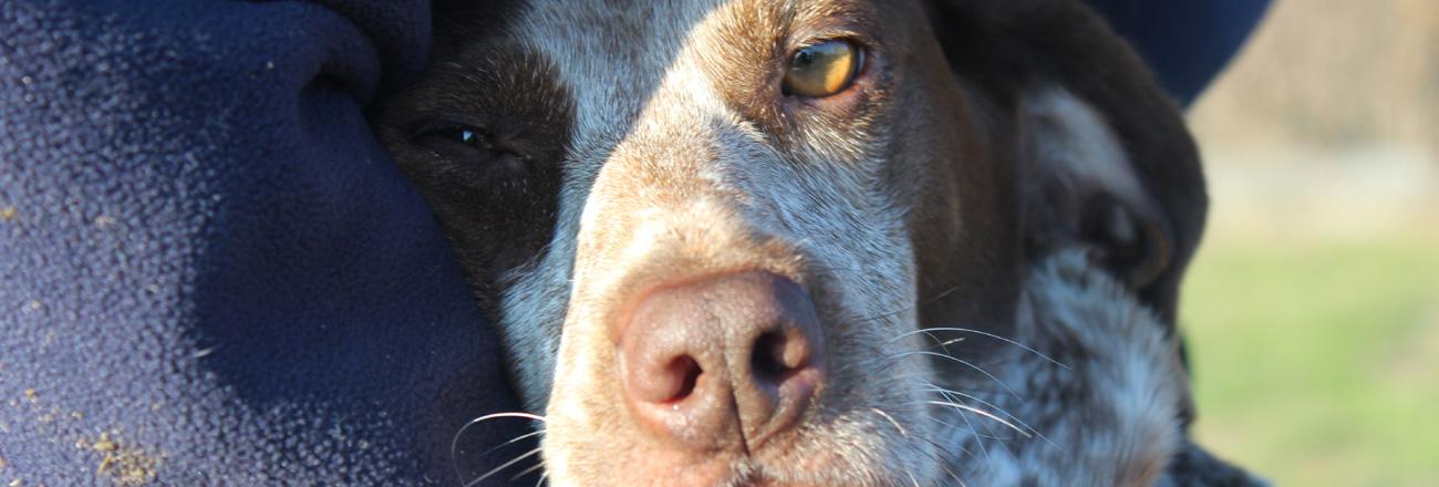 Domenica 24 febbraio a Novara: il mio cane tira al guinzaglio