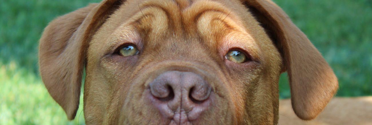 Domenica 19 maggio: dog show
