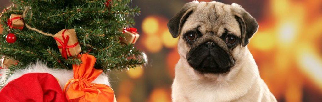 Christmas-Dogs-