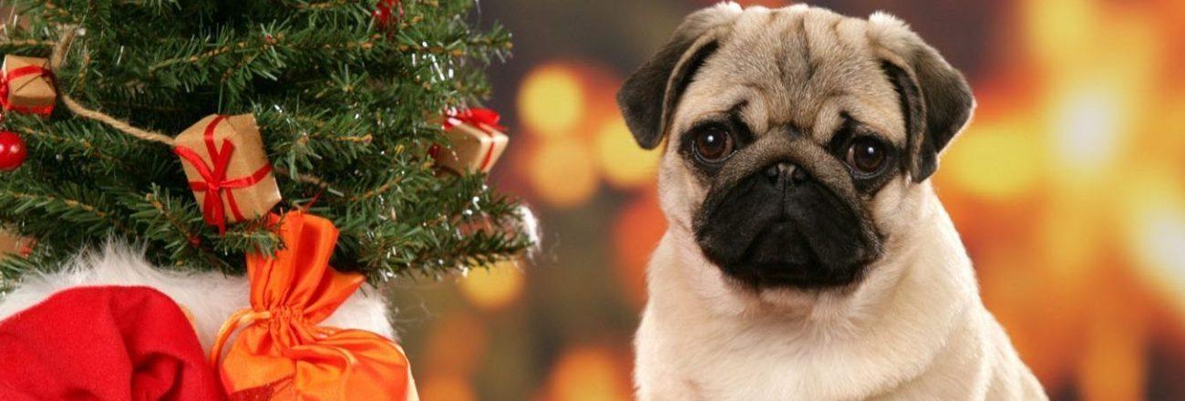 Per Natale regala un buono Go Go Dog