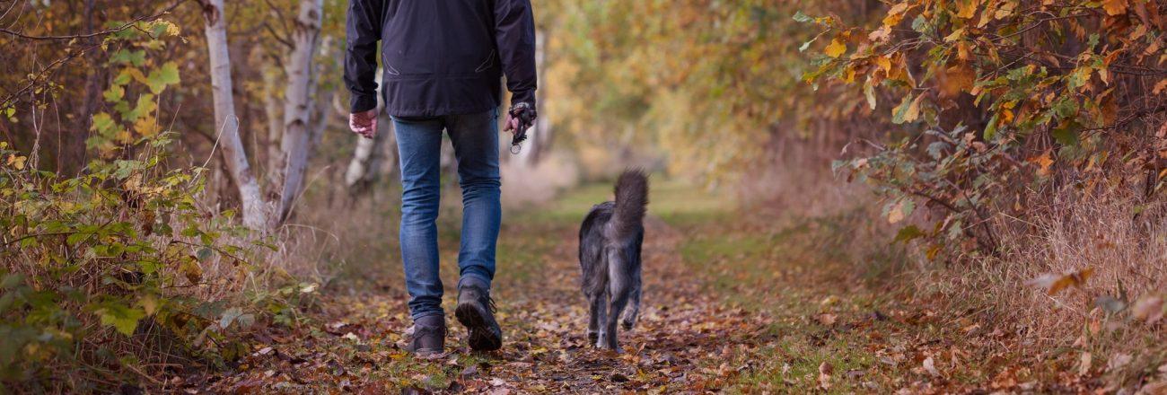 Novità: educazione urbana del cane